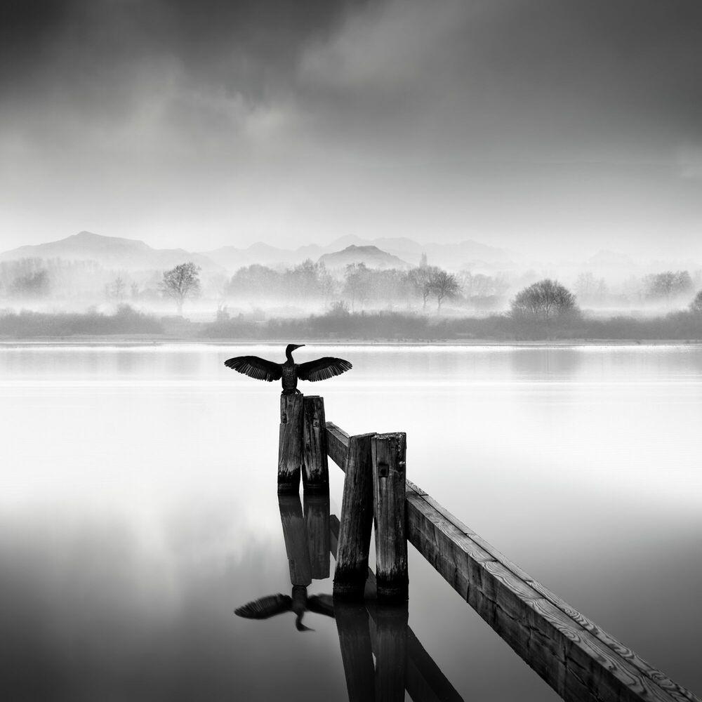 Fotografia FLY AWAY - GEORGE DIGALAKIS - Pittura di immagini
