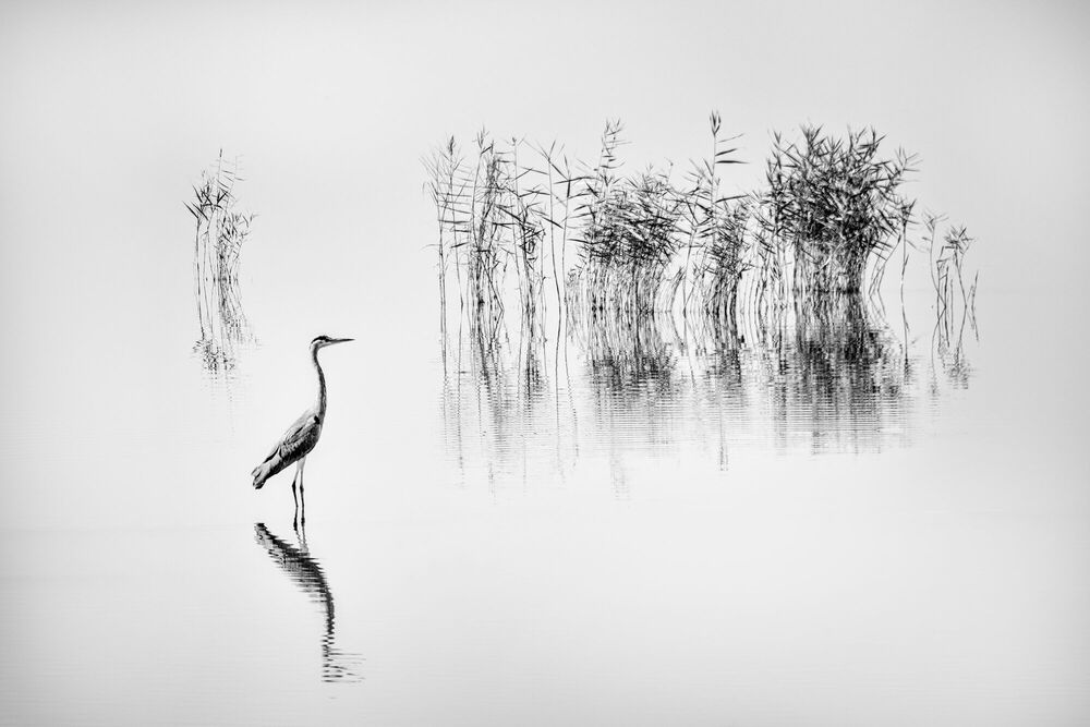 Photograph LAKE KARLA 006 - GEORGE DIGALAKIS - Picture painting