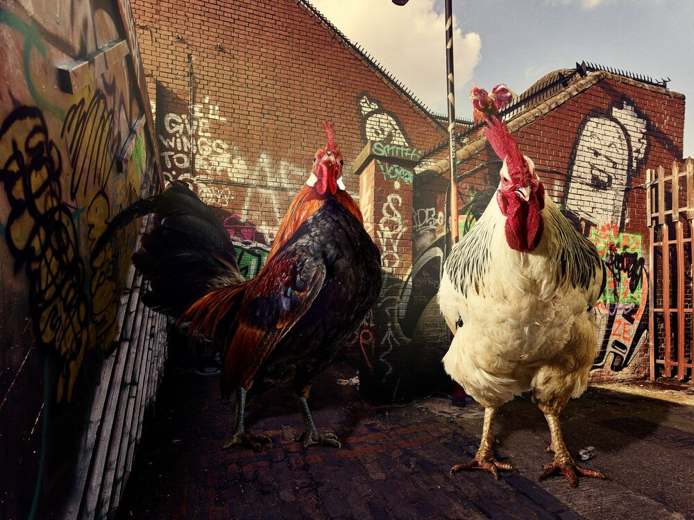 Photograph BACK STREET BIRDS - GRAHAM TOOBY - Picture painting