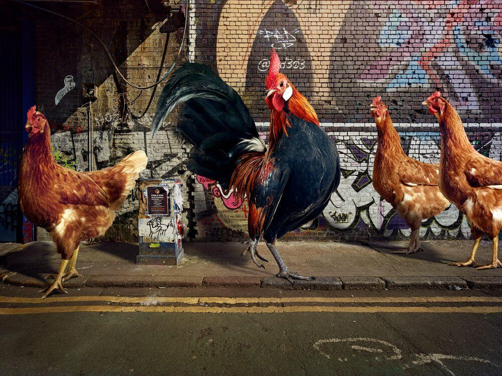 Fotografia HELLO LADIES - GRAHAM TOOBY - Pittura di immagini