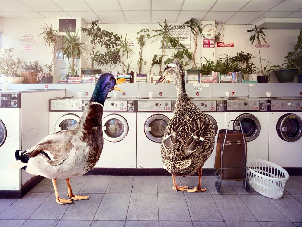 Photographie HOT GOSSIP AT THE LAUNDERETTE - GRAHAM TOOBY - Tableau photo