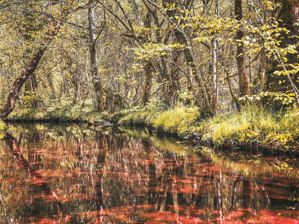 Fotografia MAGIC RIVER - HEROD BECEN - Pittura di immagini
