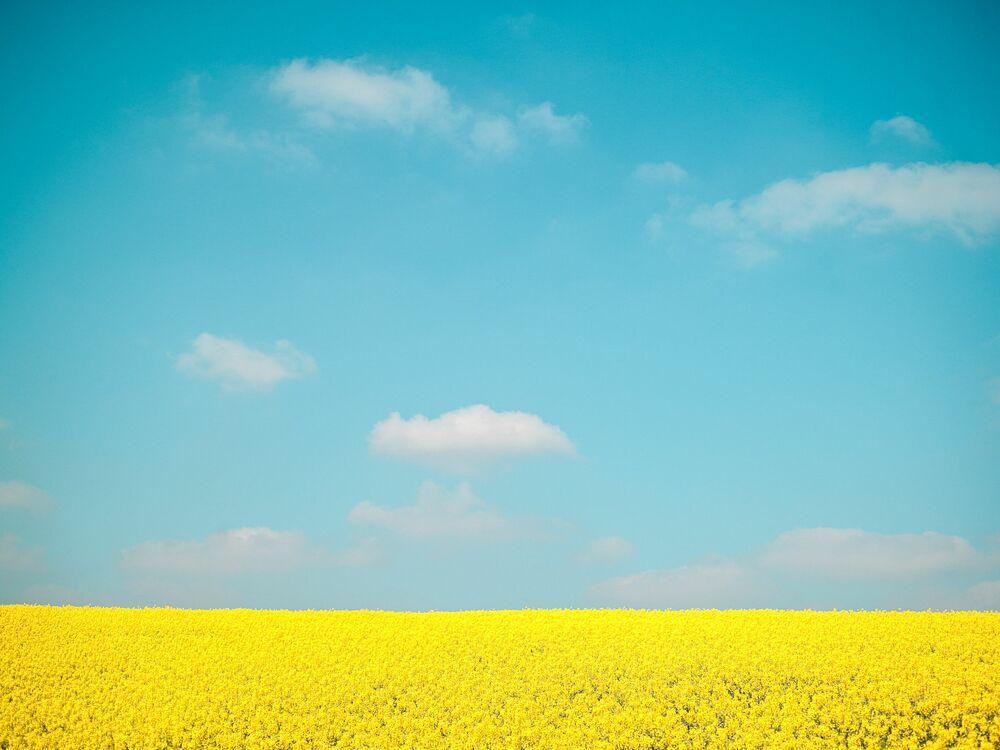 Fotografia SKY OVER FLOWERS - HEROD BECEN - Pittura di immagini