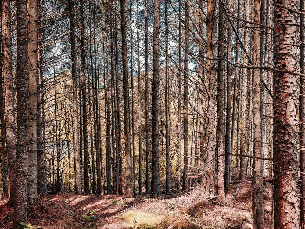 Fotografia THE FAIRY TALE FOREST - HEROD BECEN - Pittura di immagini