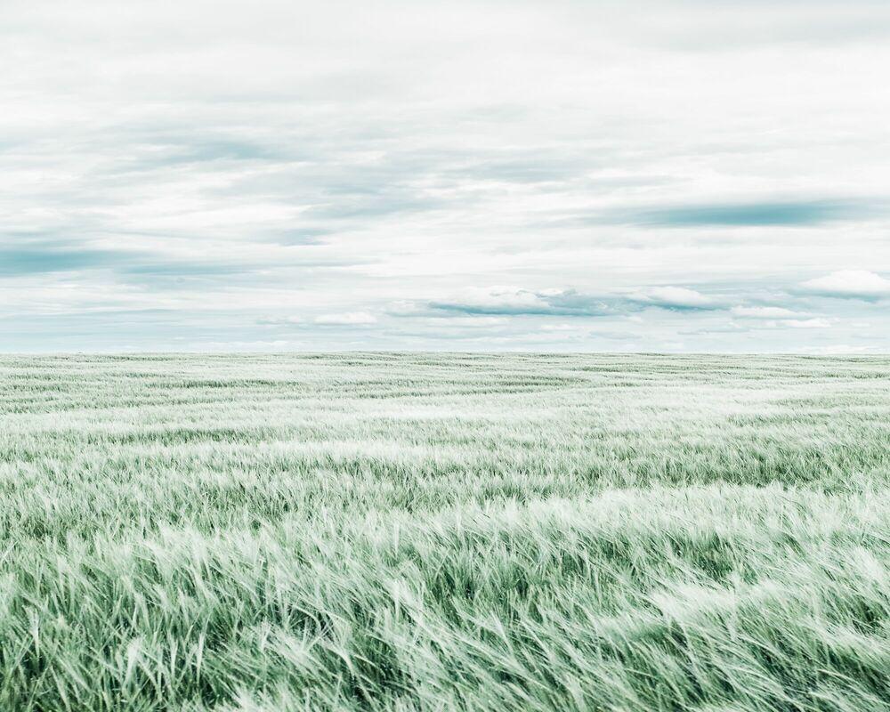Photographie THE FIELD - HEROD BECEN - Tableau photo