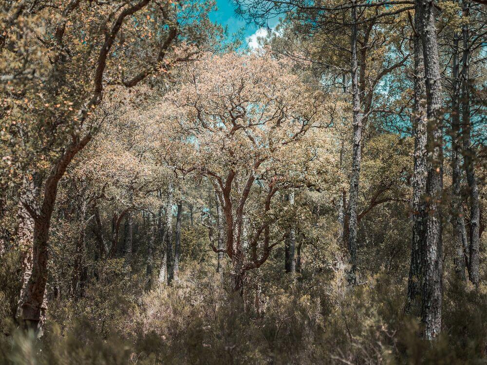 Fotografie THE TREES - HEROD BECEN - Bildermalerei