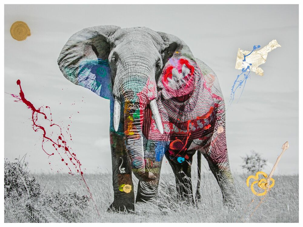 Fotografia JUMBO -  I'M NOT A TROPHY - Pittura di immagini