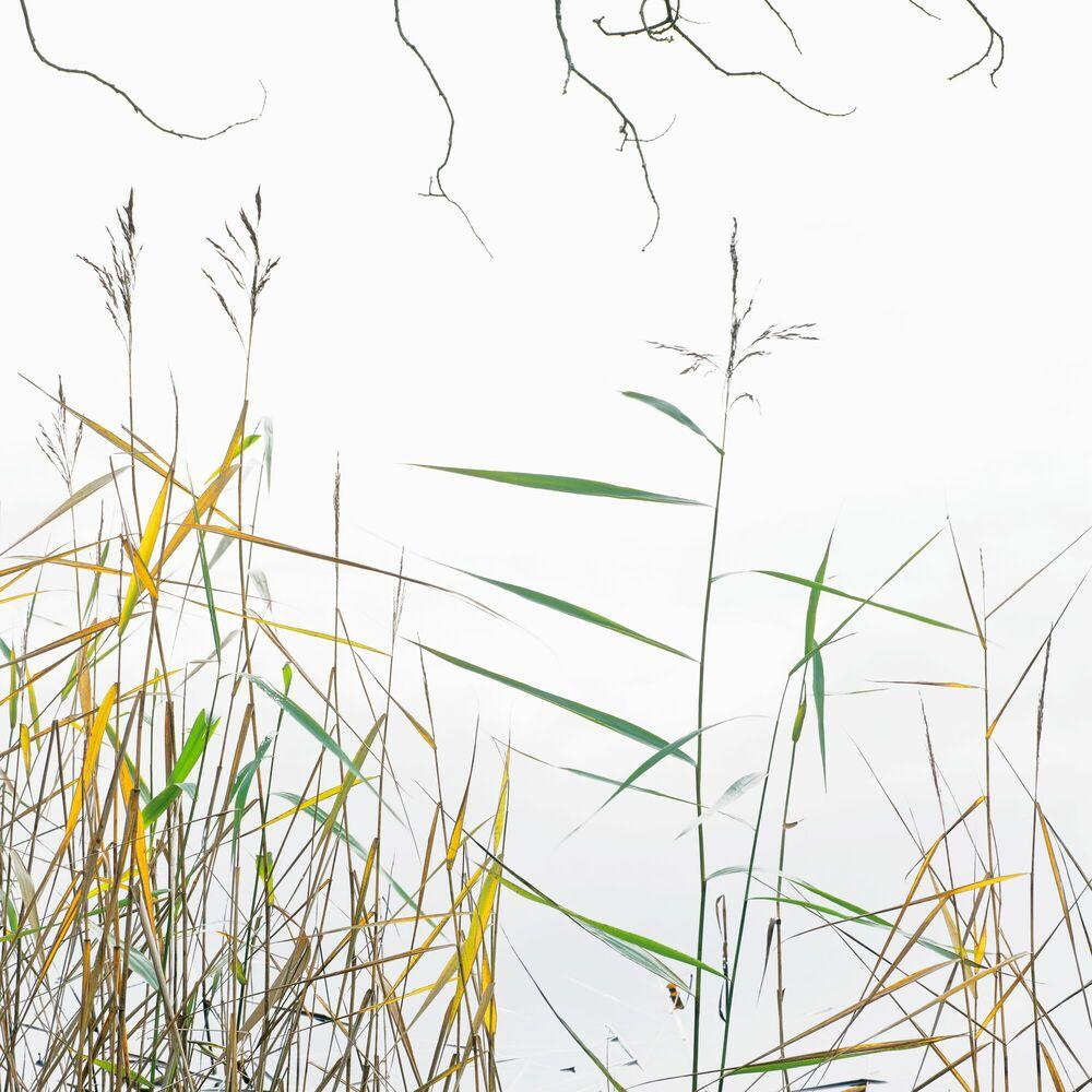 Kunstfoto ART OF MENACE - IAN CAMERON - Foto schilderij