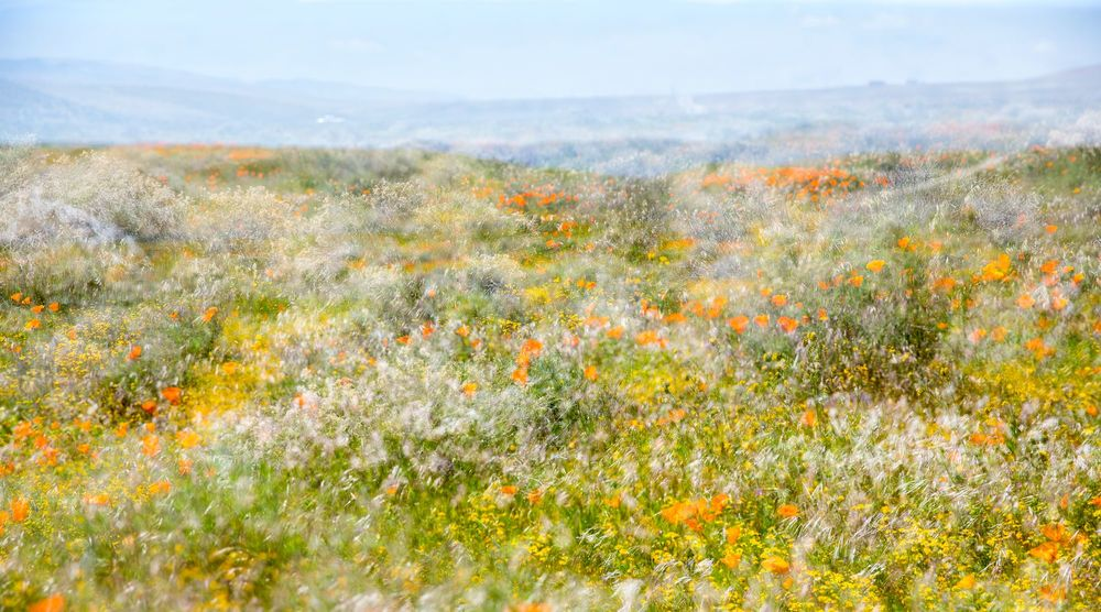 Photographie ANTELOPE VALLEY NO 2 - INA JUNGMANN - Tableau photo