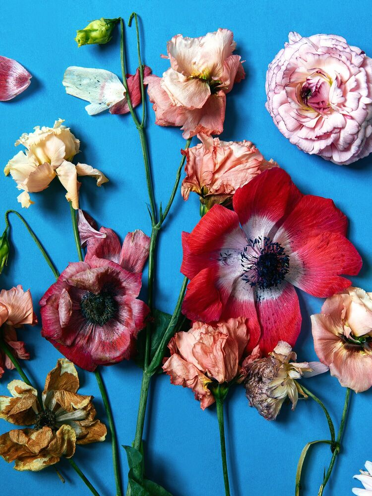 Photograph FLOWER STUDY 45 - INGRID RASMUSSEN - Picture painting