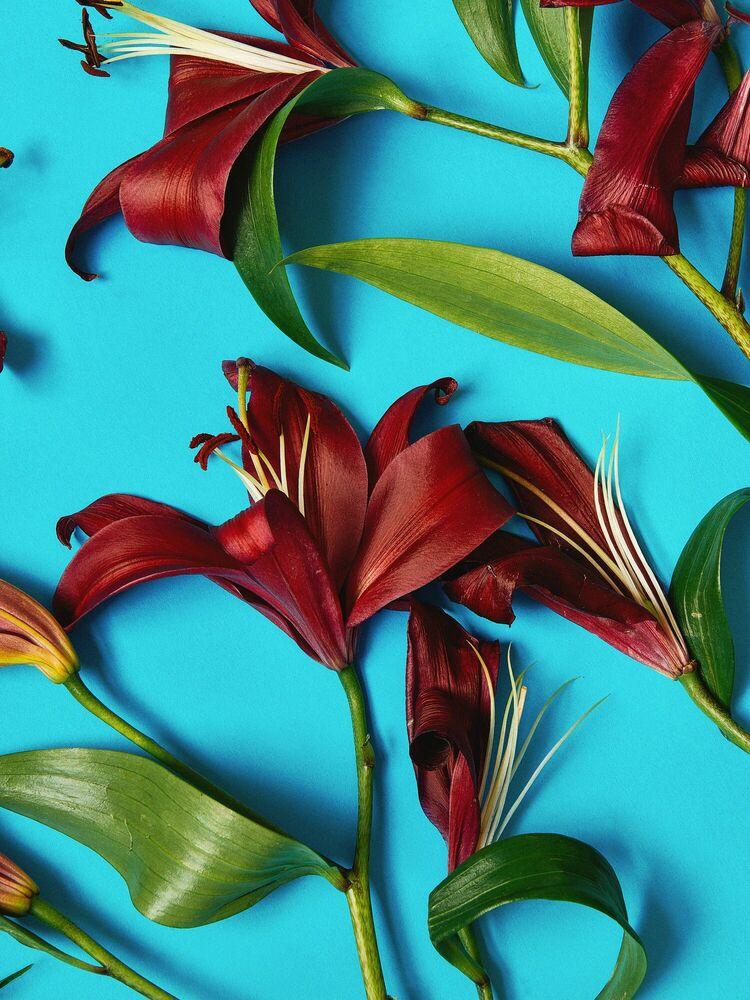 Fotografie FLOWER STUDY 8 - INGRID RASMUSSEN - Bildermalerei