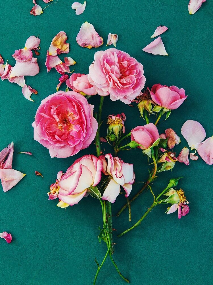 Fotografie FLOWER STUDY 9 - INGRID RASMUSSEN - Bildermalerei