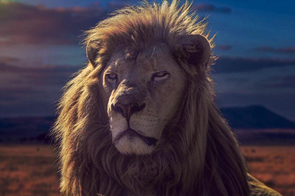 Fotografia THE GOLDEN KING - JACKSON CARVALHO - Pittura di immagini