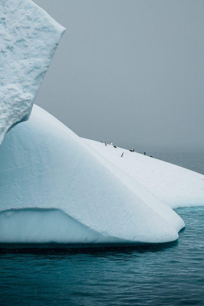 Photographie PENGUIN ISLAND-ANTARCTICA - JAN ERIK WAIDER - Tableau photo