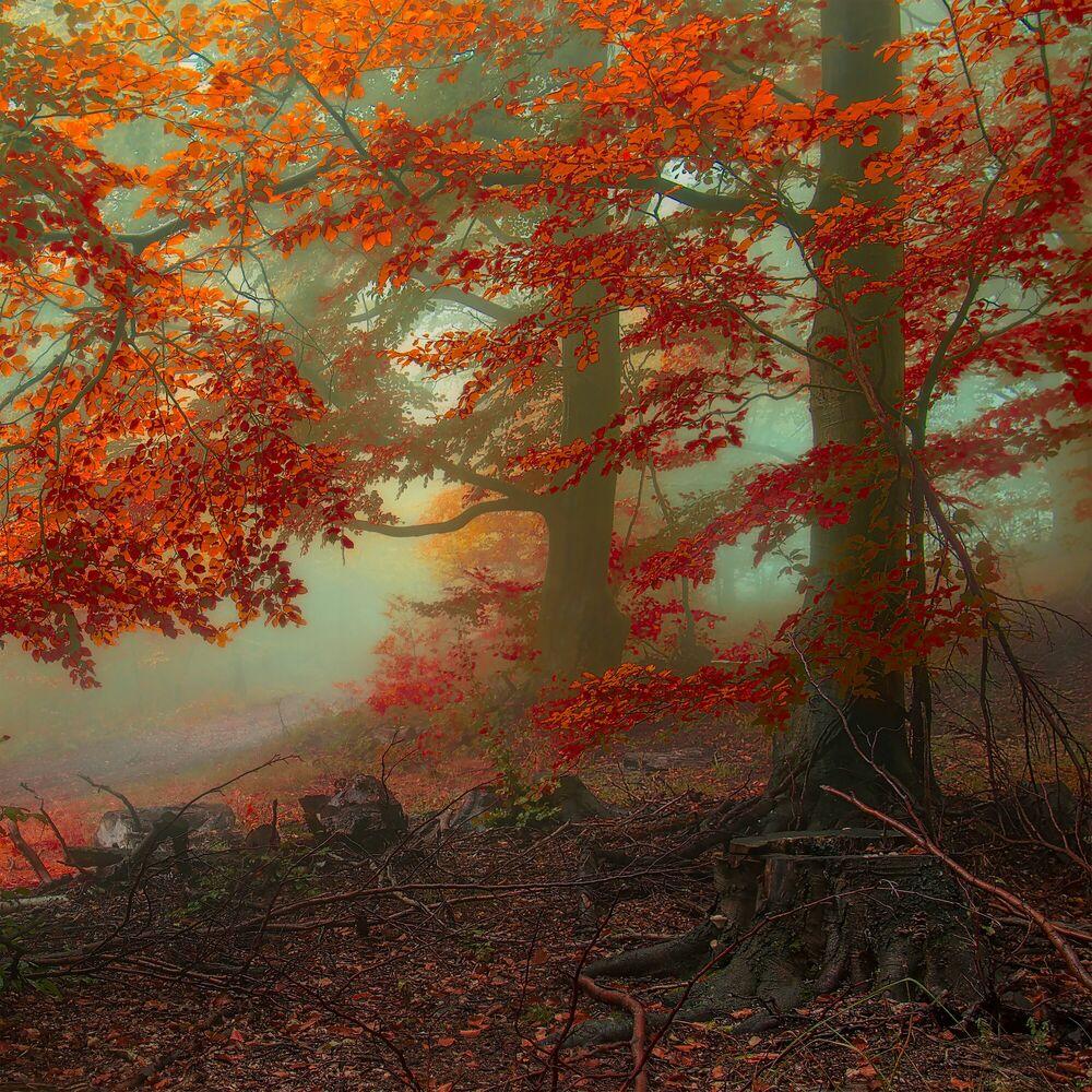 Fotografia Ancient Calling of Autumn - JANEK SEDLAR - Pittura di immagini