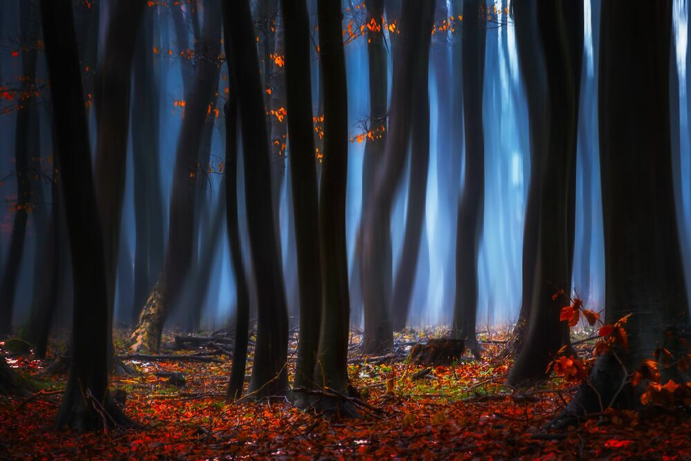 Photograph Morning Dusk of the Leaves - JANEK SEDLAR - Picture painting