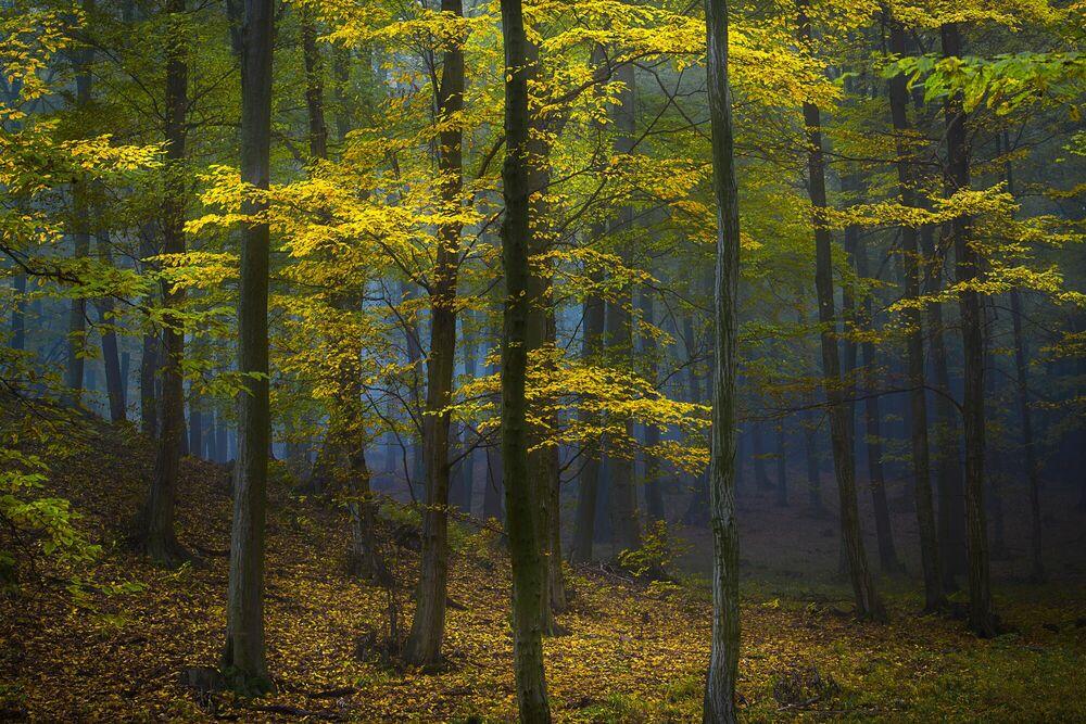 Fotografie MYSTERIOUS POWER OF THE FOREST - JANEK SEDLAR - Bildermalerei