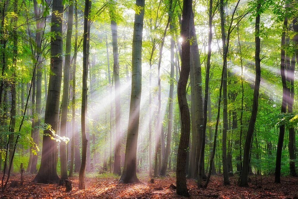 Fotografia WHEN THE SUN SHINES ON YOUR WAY - JANEK SEDLAR - Pittura di immagini