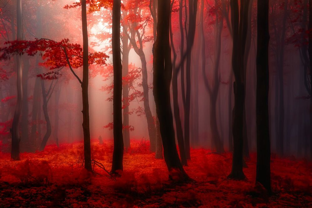 Photograph Where No Words Needed - JANEK SEDLAR - Picture painting