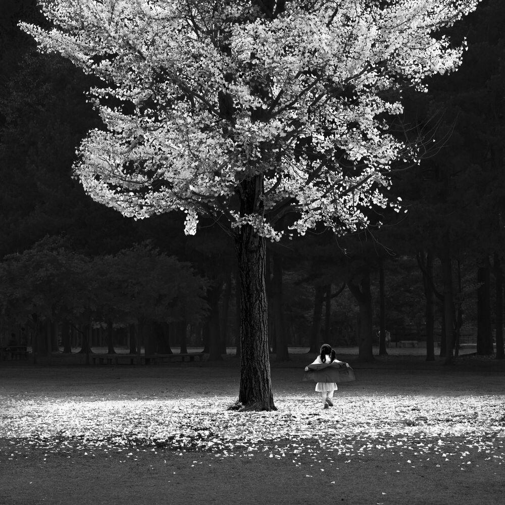 Photographie AUTUMN TREE -  JEFFLIN - Tableau photo