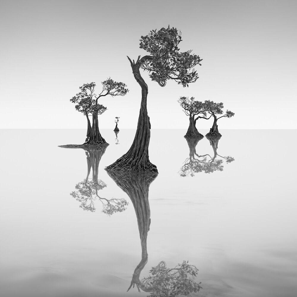 Photographie Dancing Mangrove Trees 7 -  JEFFLIN - Tableau photo