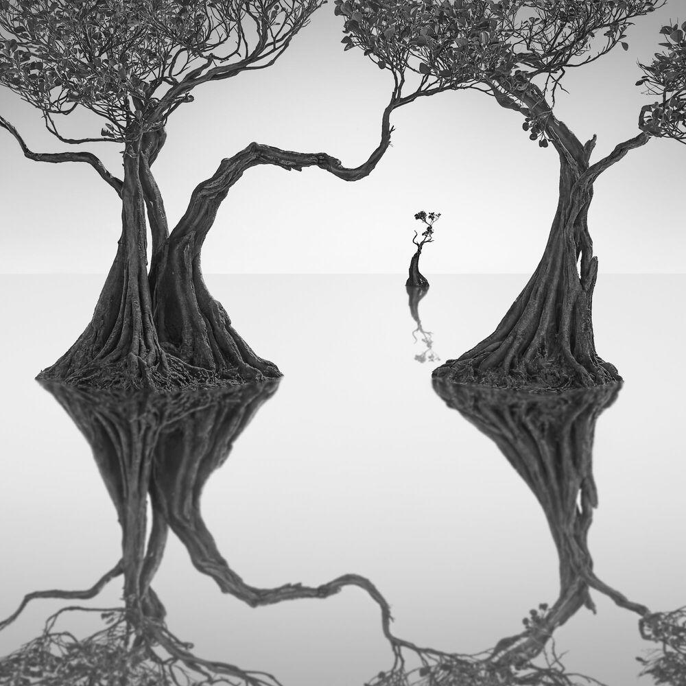 Photographie Dancing Mangrove Trees 8 -  JEFFLIN - Tableau photo