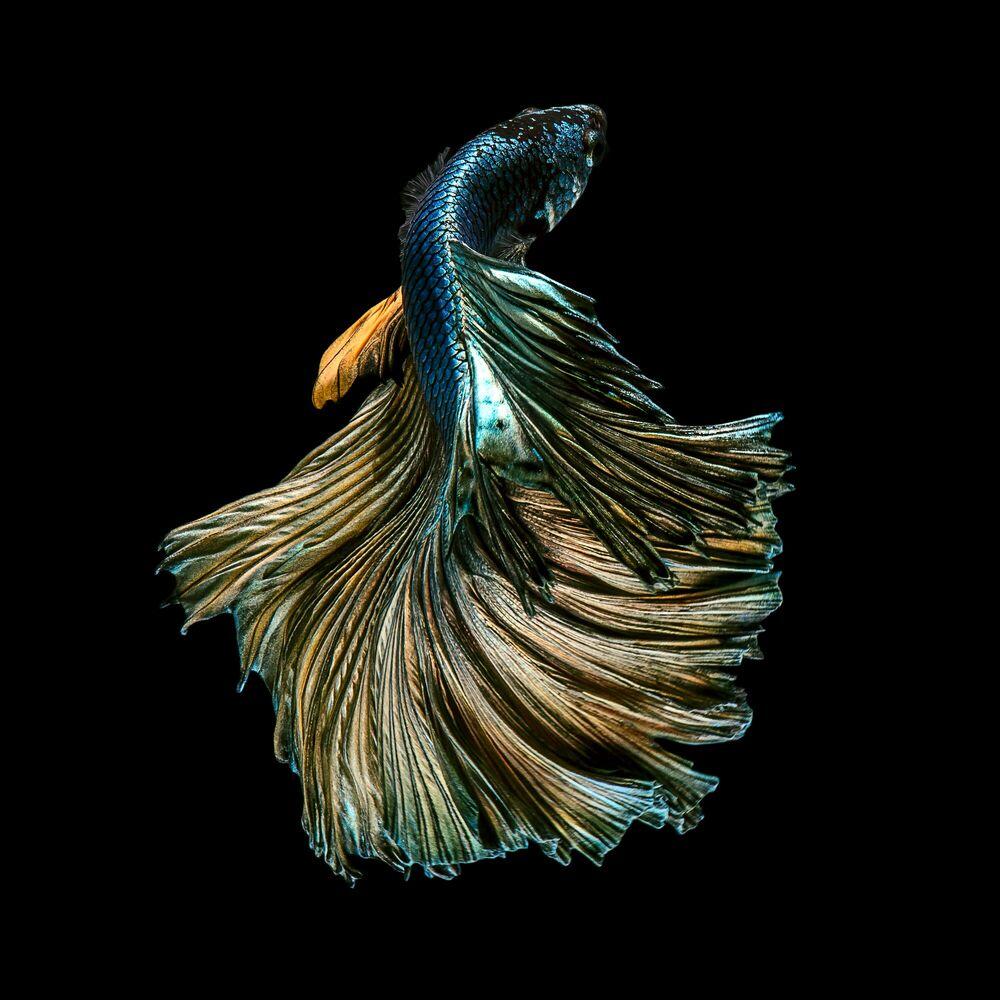 Photograph COPPER FLOWER - JIRAWAT PLEKHONGTHU - Picture painting