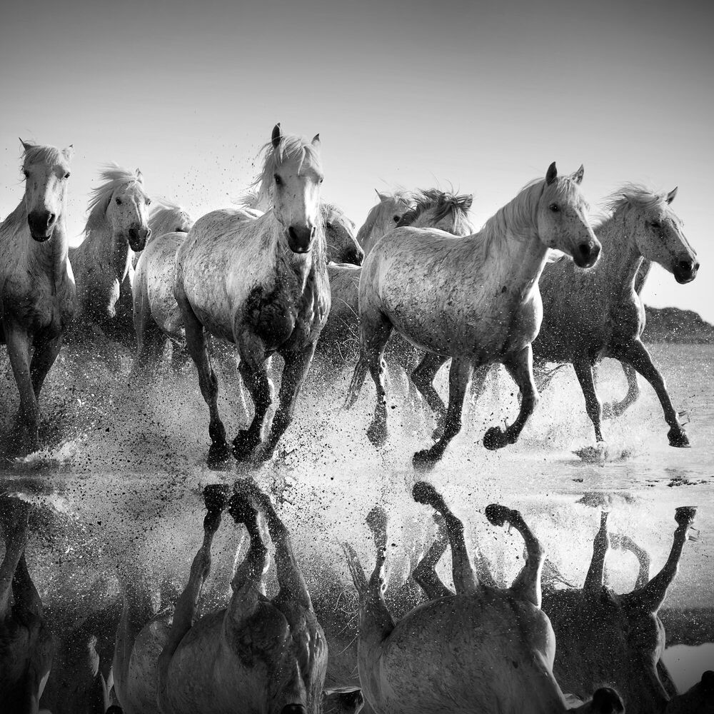 Fotografie Horses and reflexions - JONATHAN CHRITCHLEY - Bildermalerei
