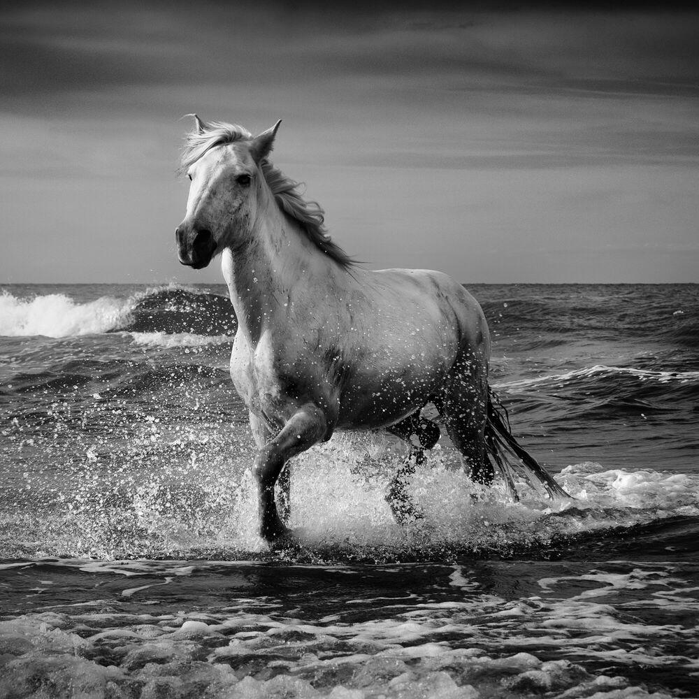 Photographie Stallion - JONATHAN CHRITCHLEY - Tableau photo