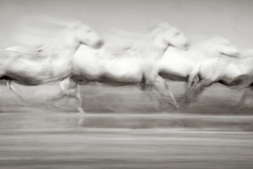 Photographie STAMPEDE - JONATHAN CHRITCHLEY - Tableau photo