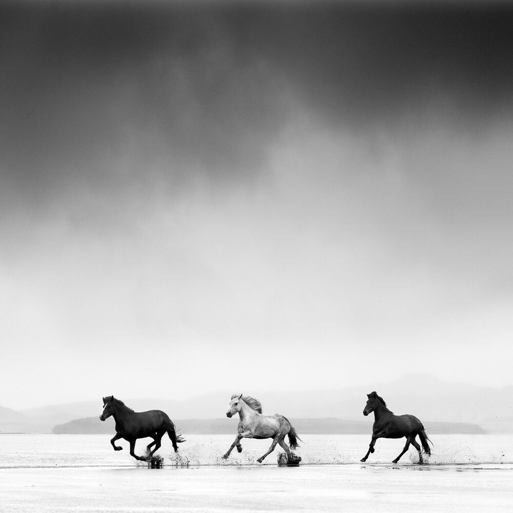 Fotografie Three horses - JONATHAN CHRITCHLEY - Bildermalerei