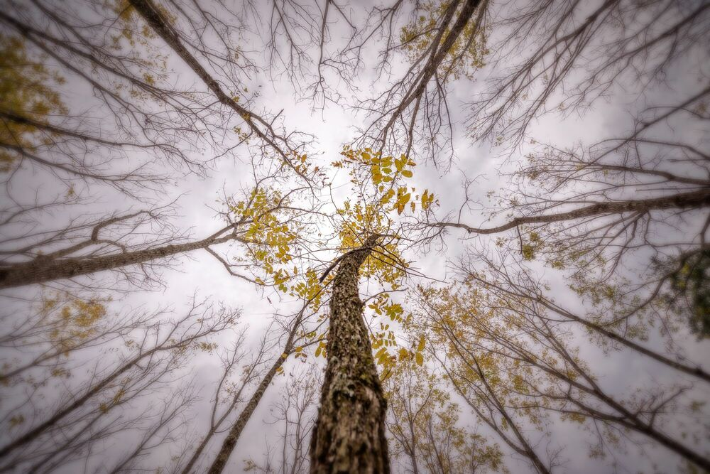 Photographie Trees in countryside - PYGMALION KARATZAS - Tableau photo