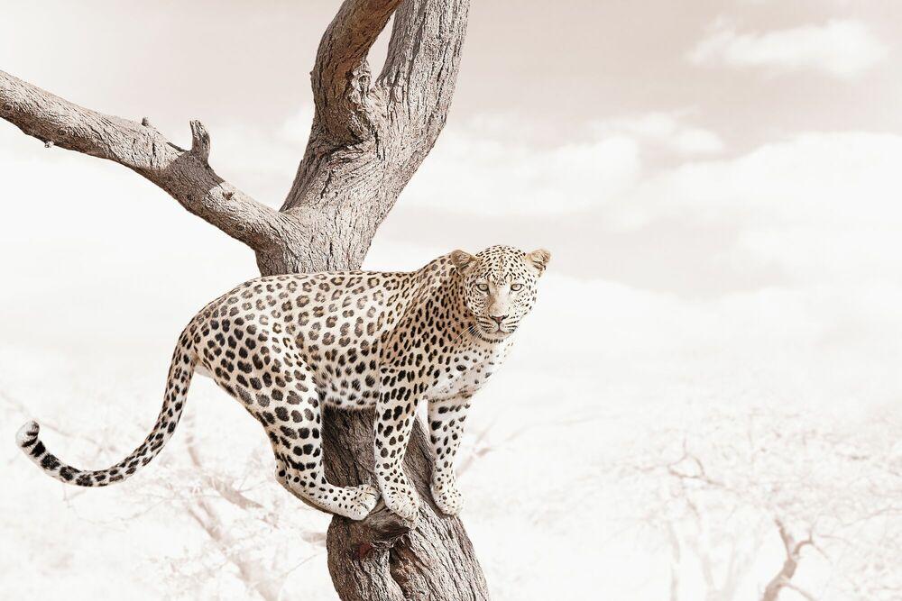 Fotografie ALERT LEOPARD - KLAUS TIEDGE - Bildermalerei
