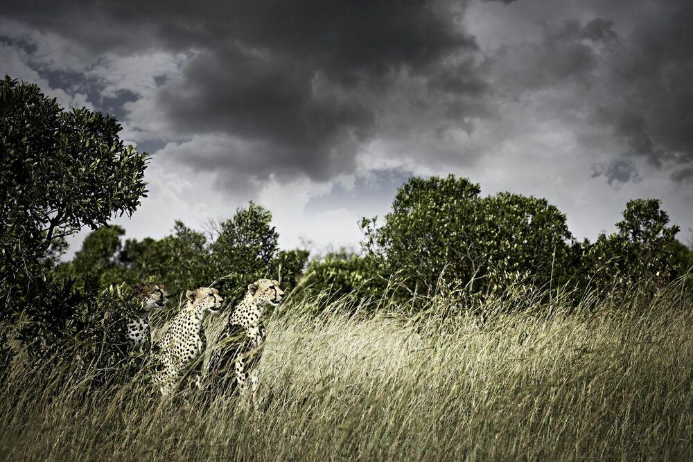 Fotografia Awaiting - KLAUS TIEDGE - Pittura di immagini