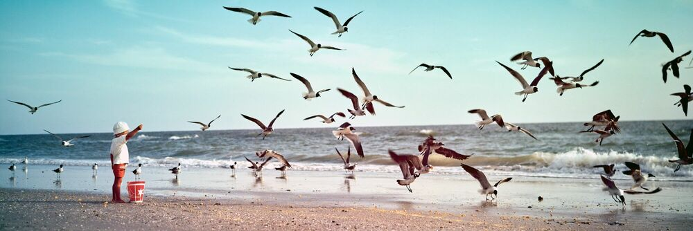 Photograph Little boy feeding gulls, 1969 - KODAK COLORAMA DISPLAY COLLECTION - OZZIE SWEET - Picture painting