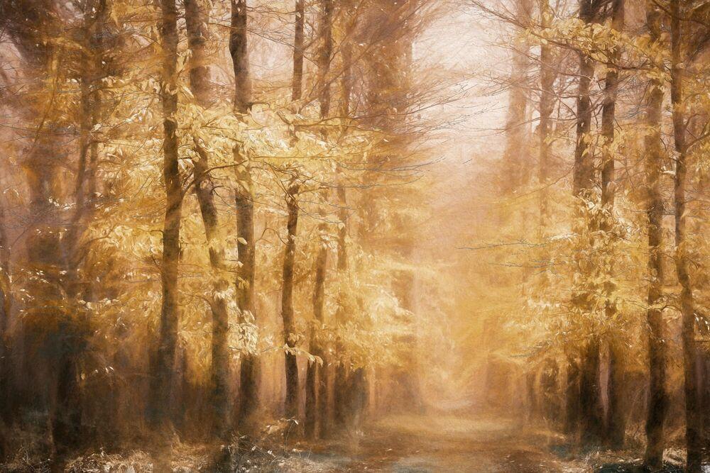Fotografia CHALKWOOD - LARS VAN DE GOOR - Pittura di immagini