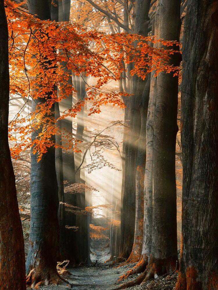 Fotografie FOR YOUR EYES ONLY - LARS VAN DE GOOR - Bildermalerei