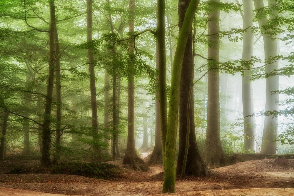 Fotografie FRAGILE MORNING - LARS VAN DE GOOR - Bildermalerei