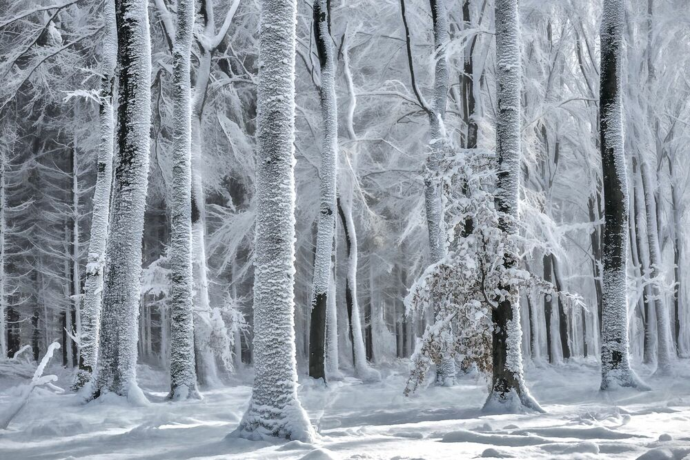 Photographie COLD IS COMING - LARS VAN DE GOOR - Tableau photo