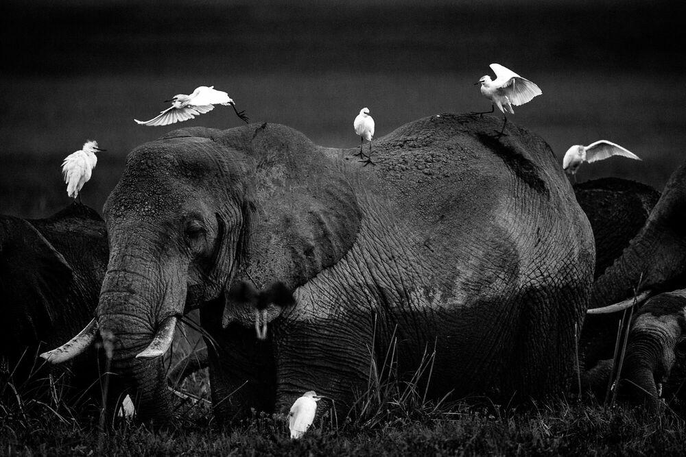 Photographie Between friends, Kenya 2015 - LAURENT BAHEUX - Tableau photo