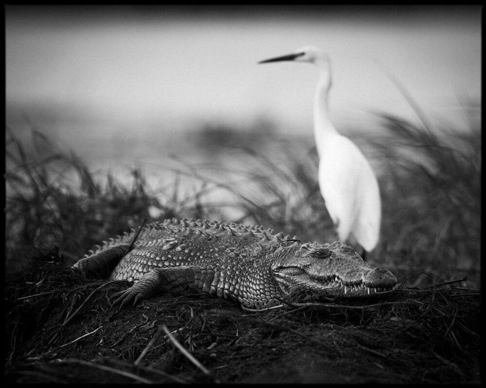 Fotografie Crawl or Fly - LAURENT BAHEUX - Bildermalerei