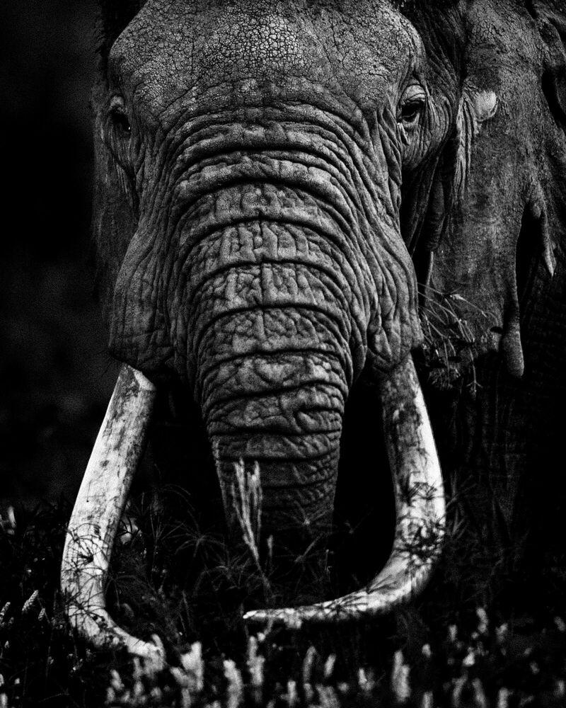 Photograph ELEPHANT CLOSE UP - LAURENT BAHEUX - Picture painting
