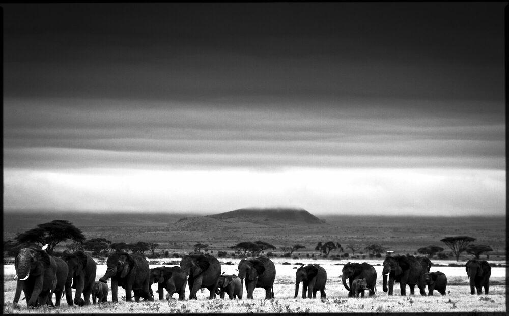Fotografie Elephant Trip - LAURENT BAHEUX - Bildermalerei