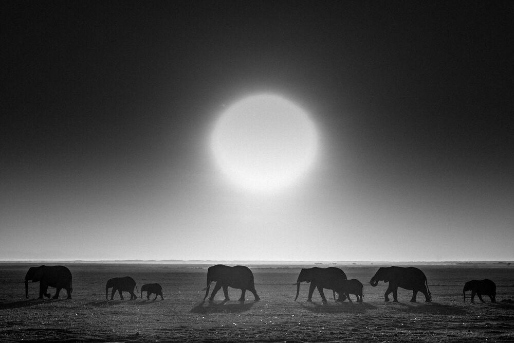 Photographie Elephants against the sun, Kenya 2015 - LAURENT BAHEUX - Tableau photo