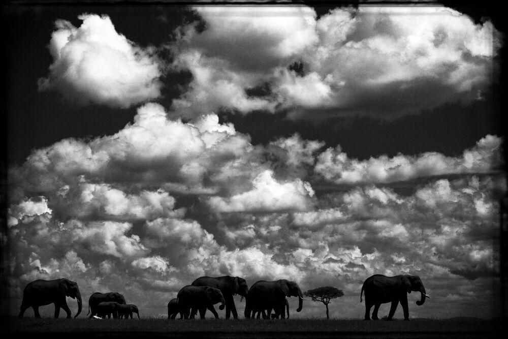 Photographie ELÉPHANTS DANS LES NUAGES - LAURENT BAHEUX - Tableau photo