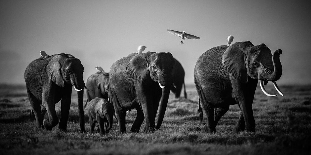Photograph Flying over giants, Kenya 2015 - LAURENT BAHEUX - Picture painting