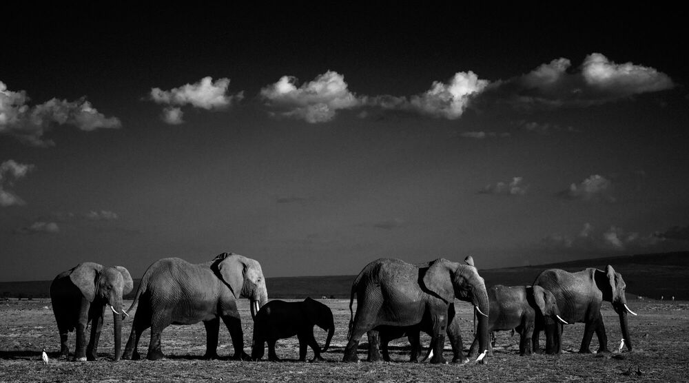 Photographie IN THE SHADE OF THE GIANTS, KENYA 2015 - LAURENT BAHEUX - Tableau photo