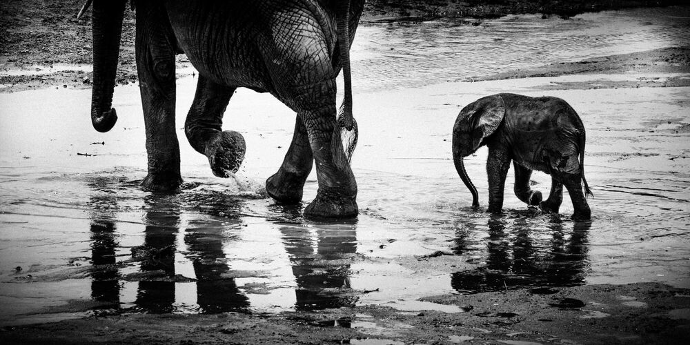 Photographie Many rivers to cross, Tanzania 2015 - LAURENT BAHEUX - Tableau photo