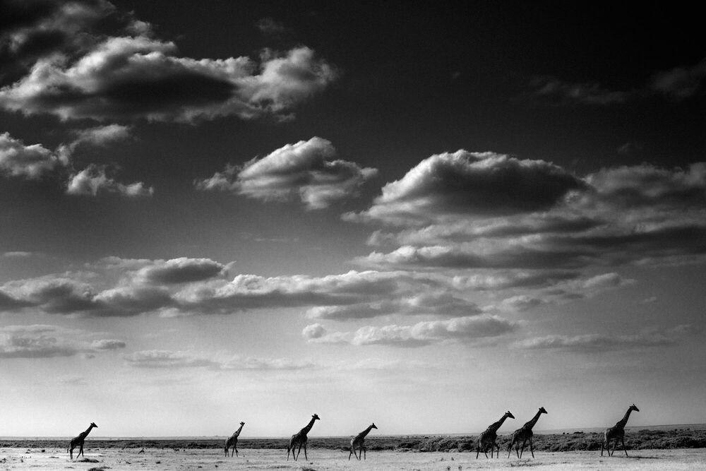 Fotografie Seven ladies following the clouds, Kenya 2013 - LAURENT BAHEUX - Bildermalerei