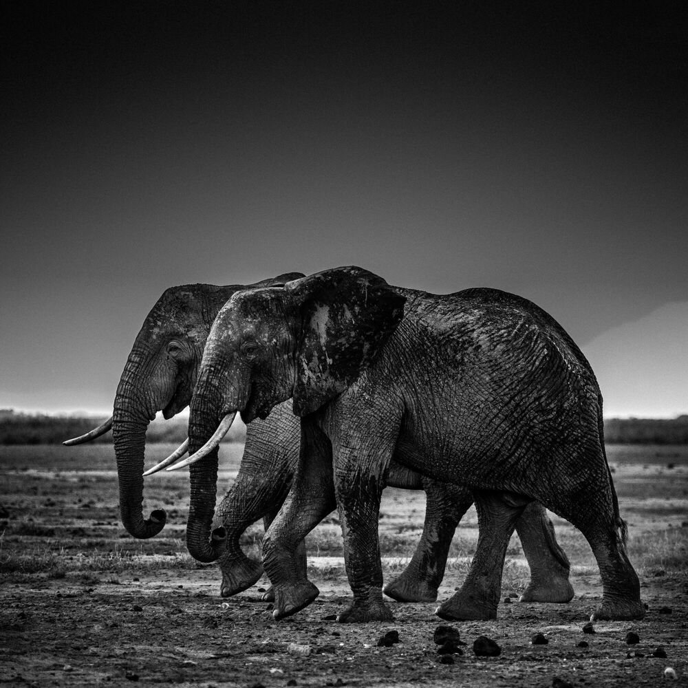 Photograph Side by side, Kenya 2015 - LAURENT BAHEUX - Picture painting